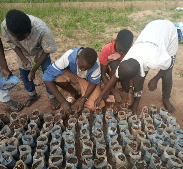 Boys from Sawla planting seeds into recycled clean water plastics that kids collected from Sawla streets